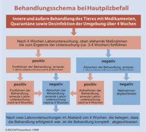 DeutschlandParasiten Esccap Hautpilze Hautpilz Beim Hund mv0wNnO8