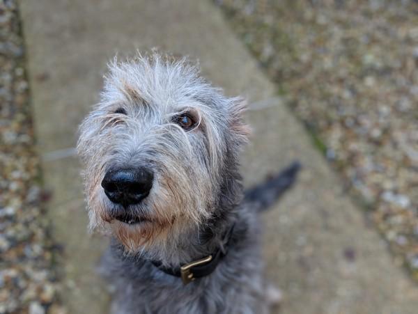 Esccap Deutschland Parasiten Läuse Haarlinge Haarlinge Beim Hund