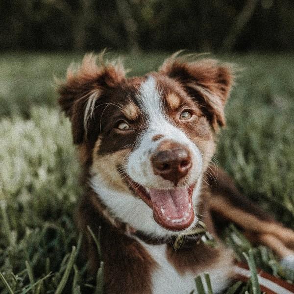 Herpes hund mensch. Herpes beim Hund: Impfung gegen das