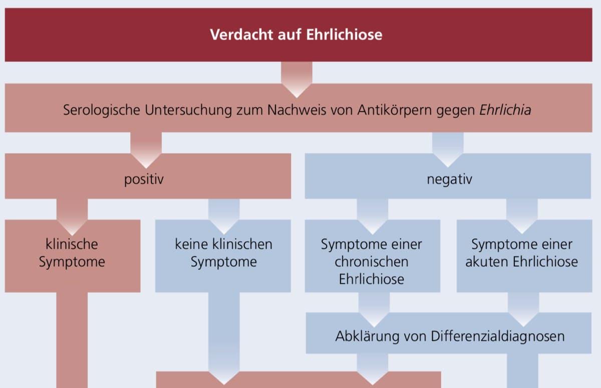 Diagnoseleitfaden der Ehrlichiose