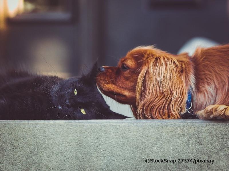 Hund schnuppert Ohr von Katze