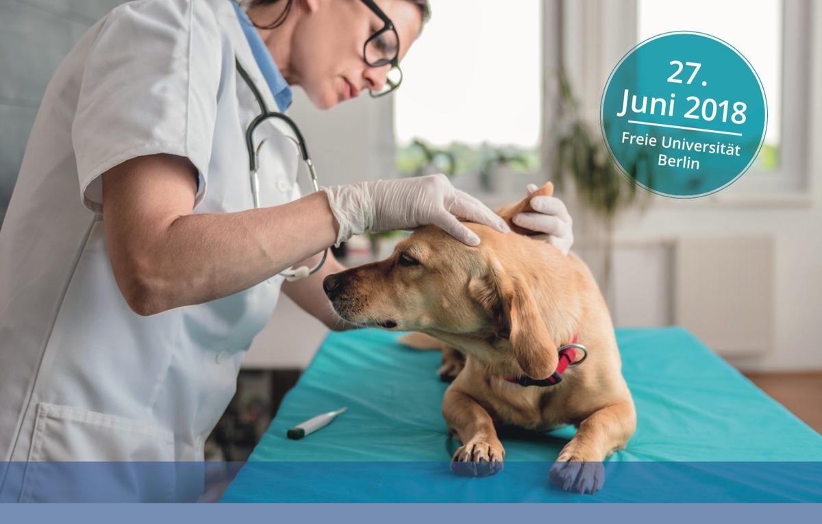 Tierärztin untersucht Hund