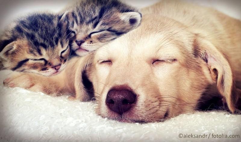 Hund liegt auf Decke. Auf seiner linken Pfote liegen zwei schlafende Katzen-Babys