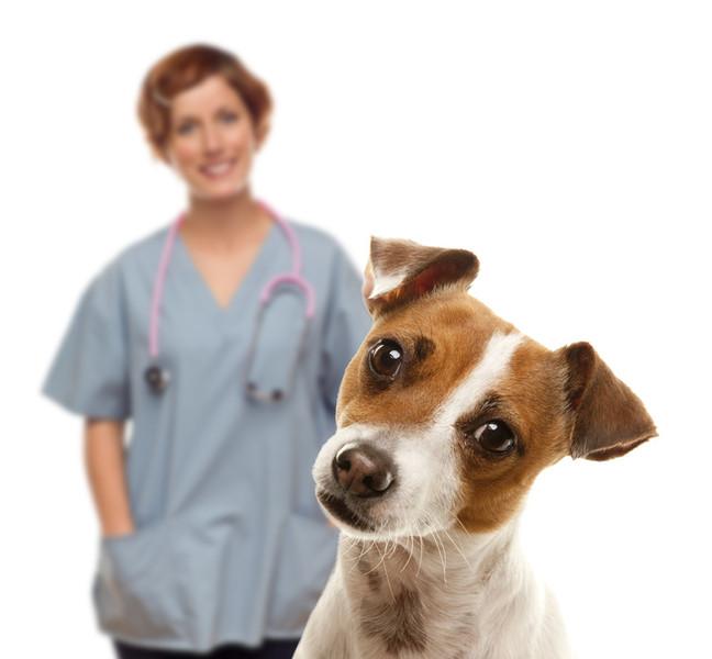 Hund schaut mit schiefen Kopf in die Kamera. Tierärztin steht lächelnd im Hintergrund