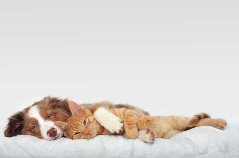Brauner Hund liegt hinter Katze und umarmt sie mit seiner Pfote
