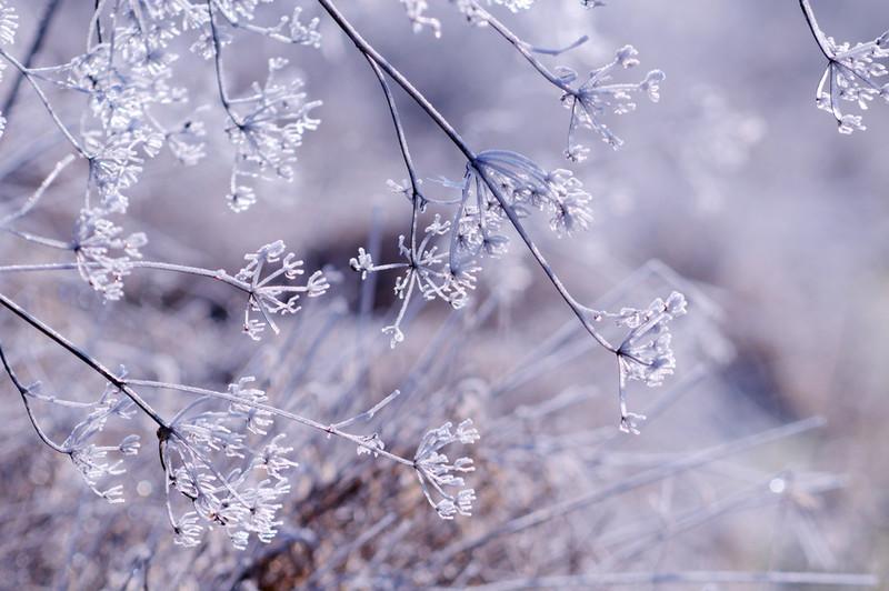 Eingefrorene Äste