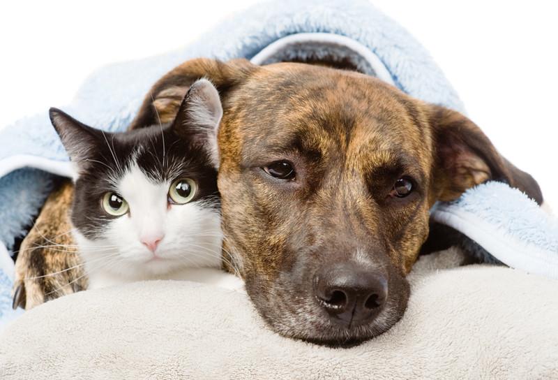 Hund und Katze liegen zusammen unter einer Decke