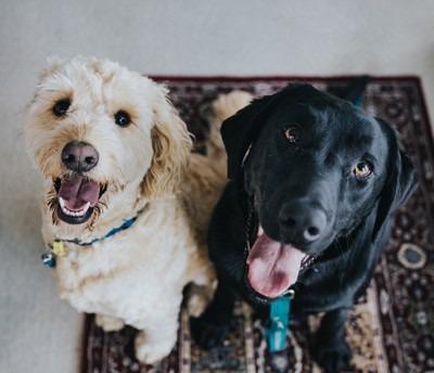 Ein heller und ein dunkler Hund schauen sitzend in die Kamera