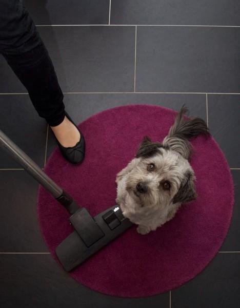 Hund sitzt auf Teppich voller Fell. Frau steht daneben mit Staubsauger. Topshot