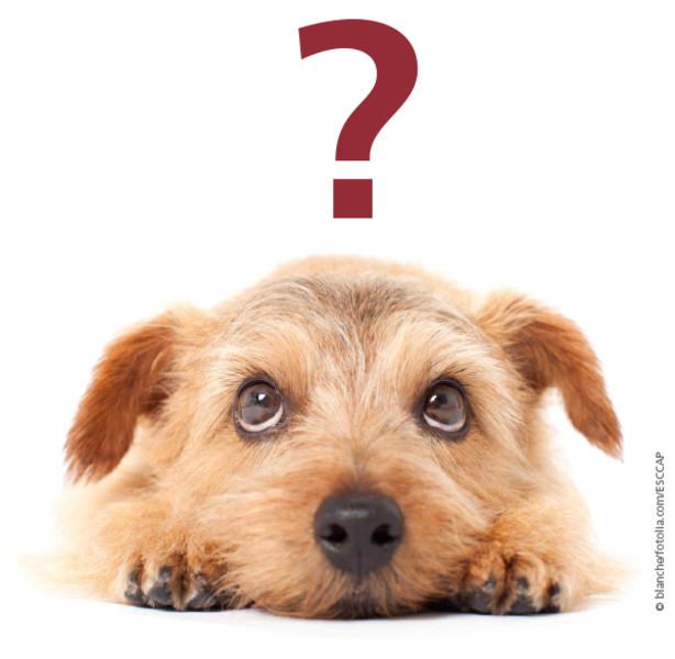 Hund schaut nach oben. Rotes Fragezeichen über seinem Kopf