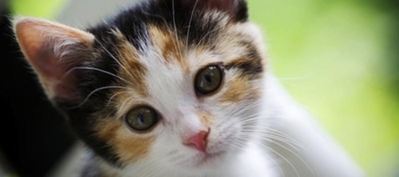Junge bunte Katze schaut mit schiefen Kopf in die Kamera