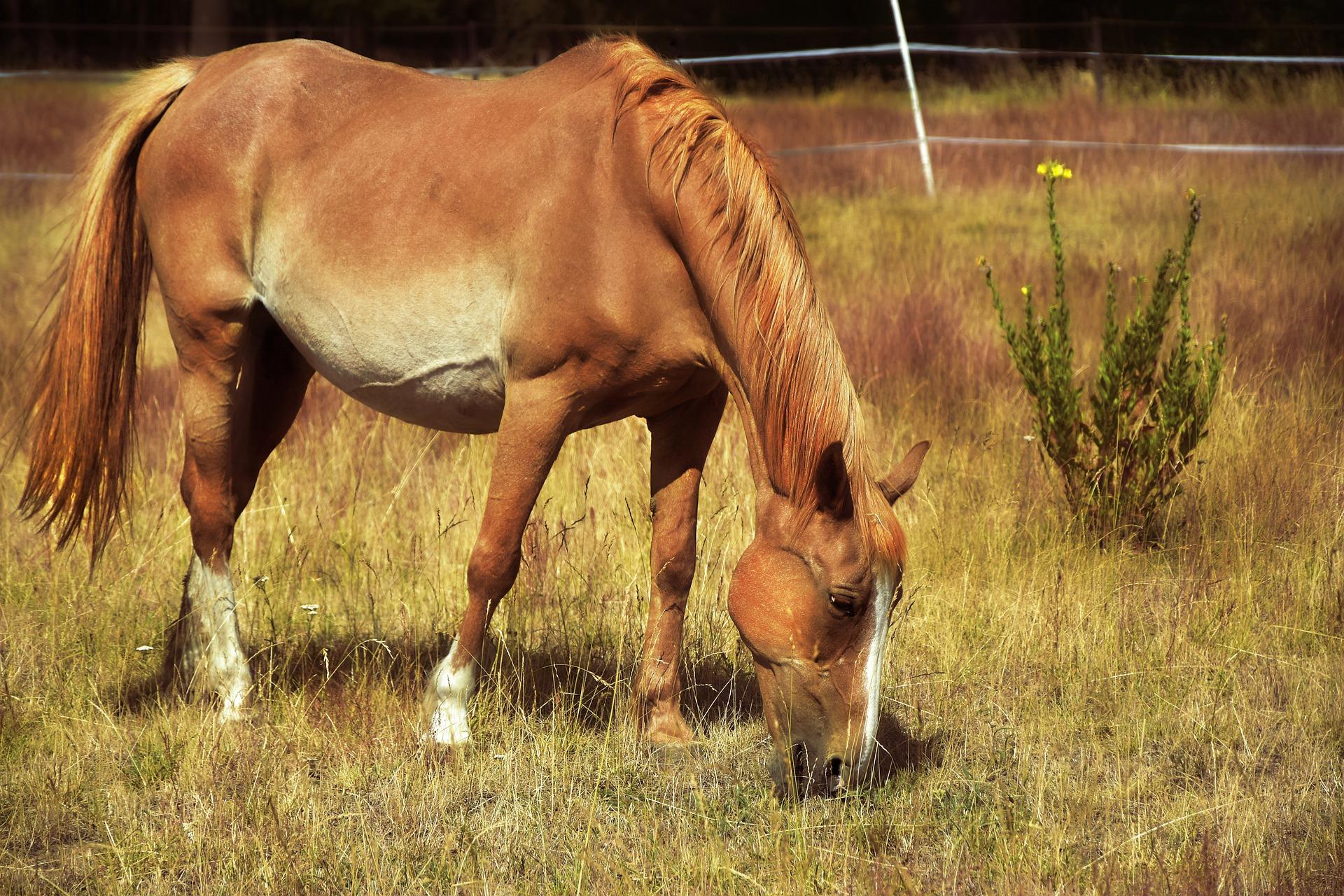 Pferd grast auf Weide, Sommer