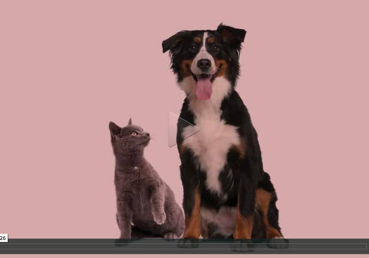 Hund und Katze sitzen nebeneinander vor einem pinken Hintergrund. Hund schaut in die Kamera. Katze schaut Hund an und hebt Pfote