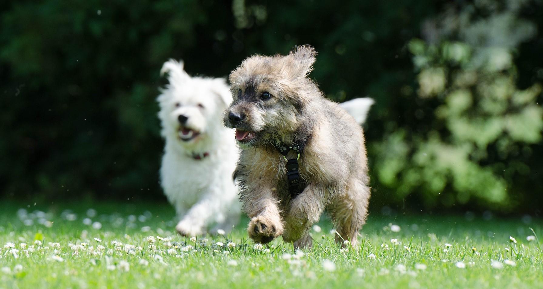 Zwei Hunde spielen draußen