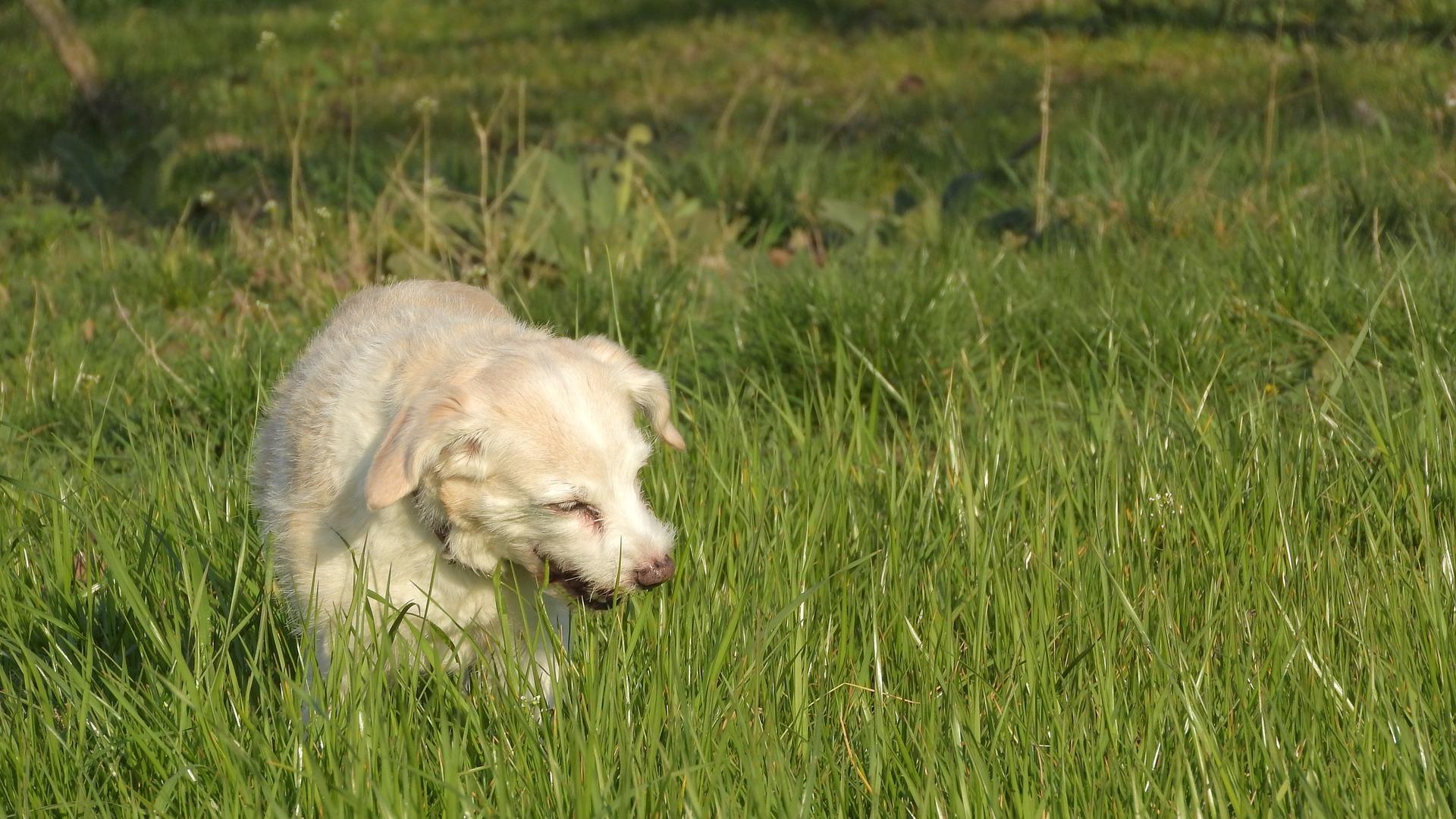 Hund frisst im Gras