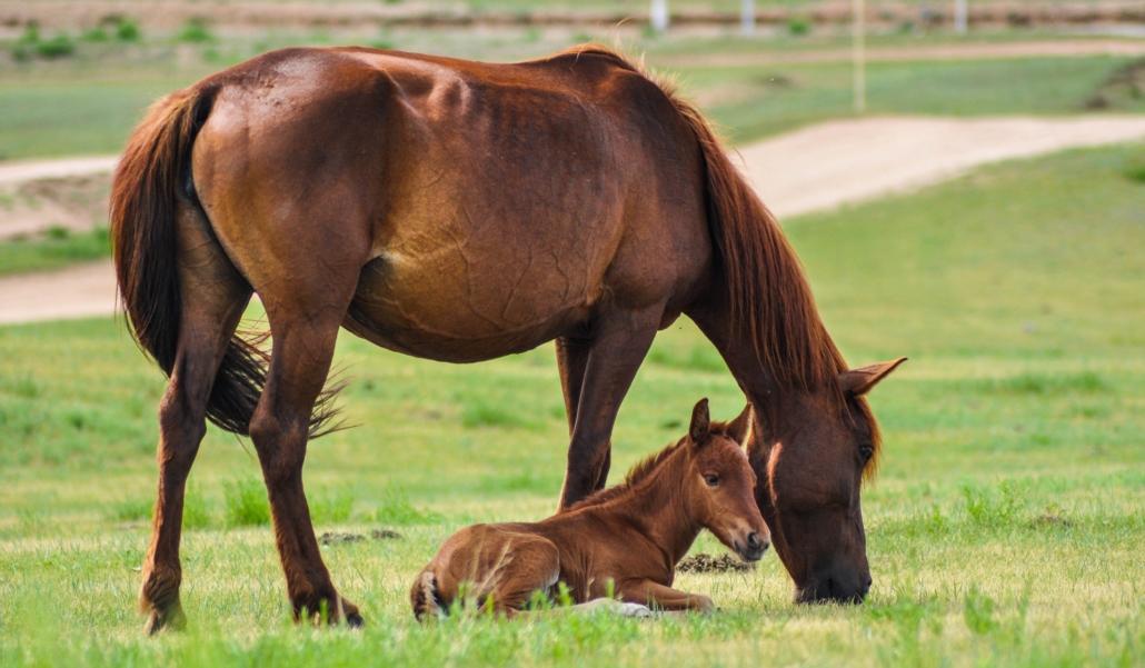 Pferd mit Fohlen auf Koppel
